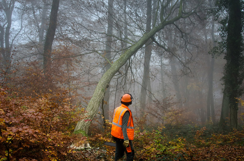 Woodland and Forestry Services in Uttoxeter, Staffordshire